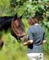 Polo de concours pour cavalière en Lyocell