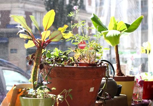 plantes_unis_vert_nature_laure_molard