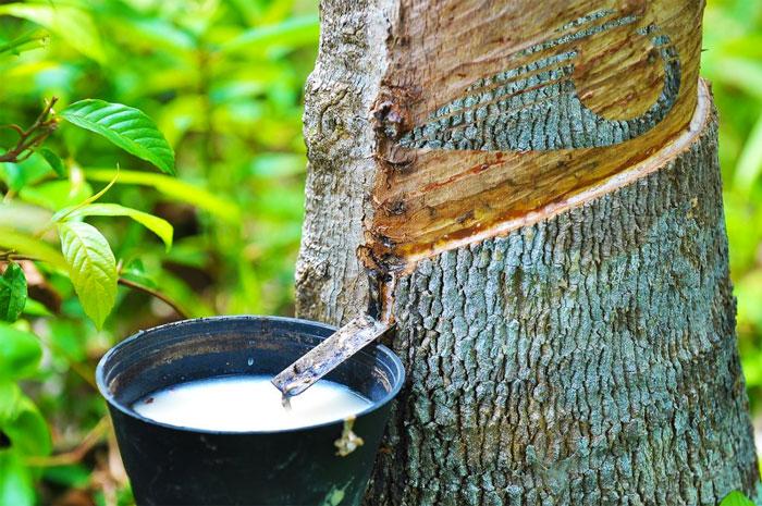 Combinaisons eco-responsables sooruz en Naturalprene à base d'hevea